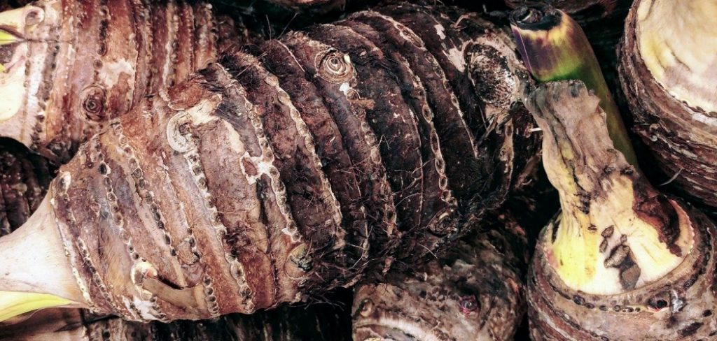 The untapped benefits of cocoyam
